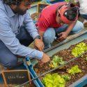 « P'tite main verte » L'autosuffisance alimentaire fait école à la H. Chooromoney Government School…