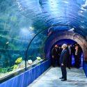 Odysseo le plus grand Océanarium de l'Océan Indien se trouve à Les Salines